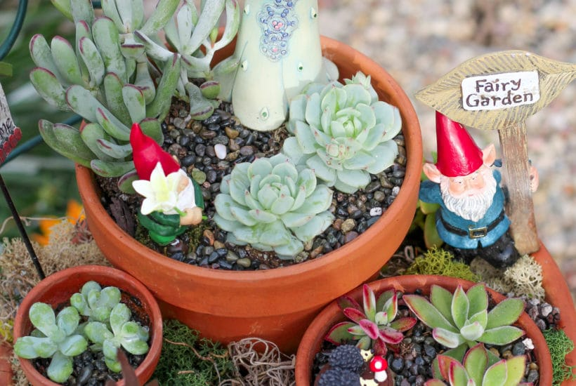 Learn how to make a DIY fairy garden!