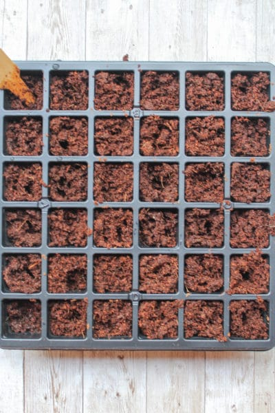 Learn How to Start Seeds Indoors so You Can Save Money On Your Garden