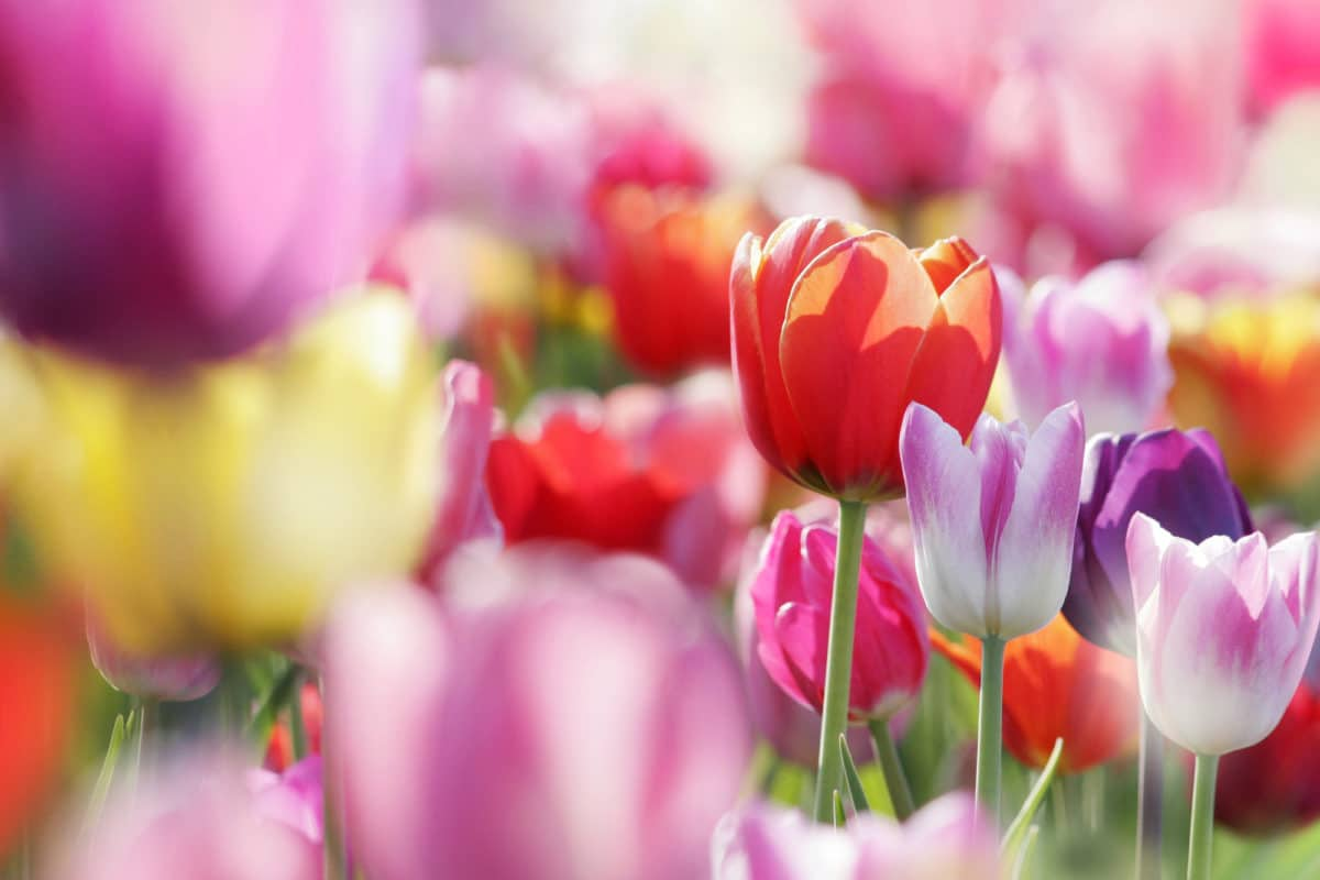 Learn how to grow a cut flower garden!