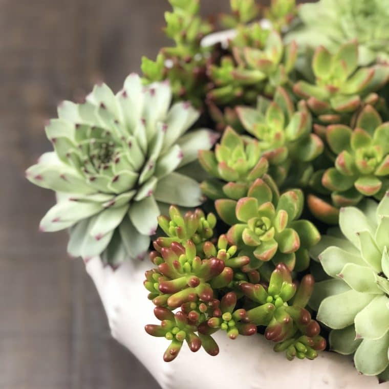 Learn all about caring for hens and chicks!