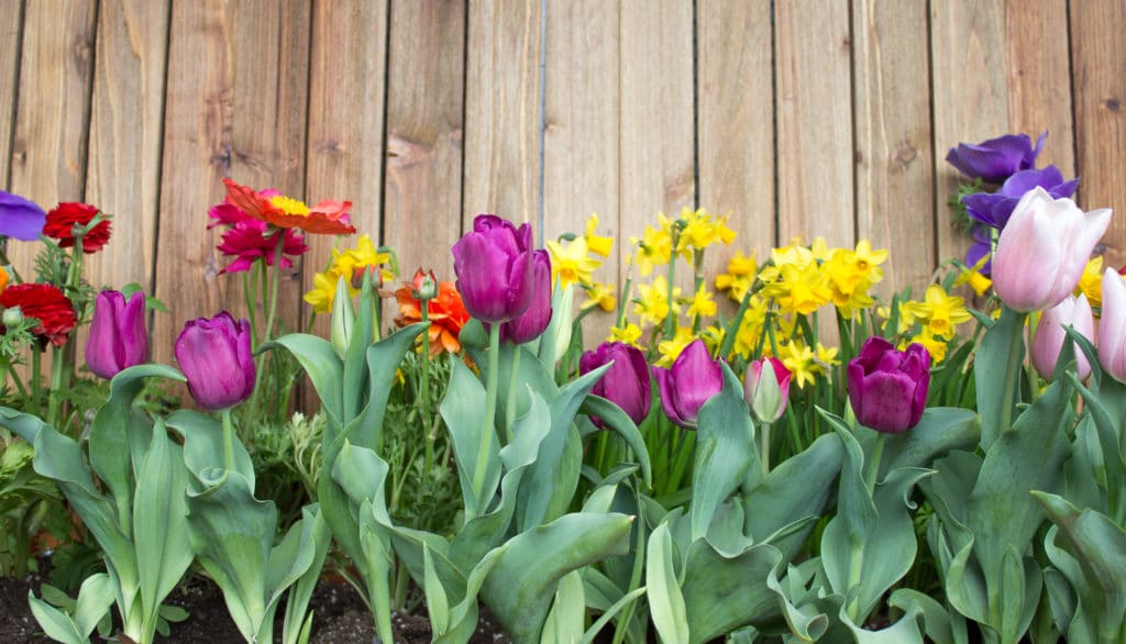 Learn how to grow a cutting garden so you can make floral arrangements!