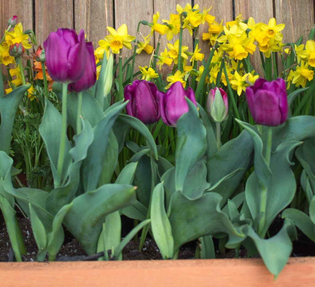 How to Grow a Cutting Garden with Annuals and Bulbs!