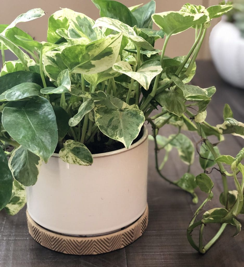 10 Best Indoor Light-Light Plants!