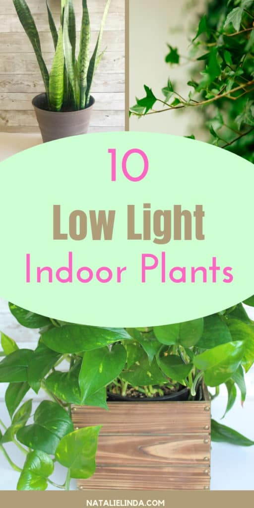 Check out these 10 Low Light Indoor Plants that are perfect for growing inside your home and office!