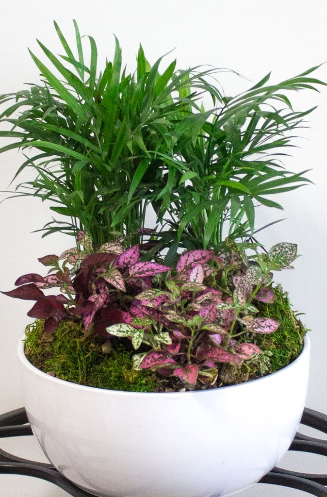10 Best Low-Light Indoor Houseplants!