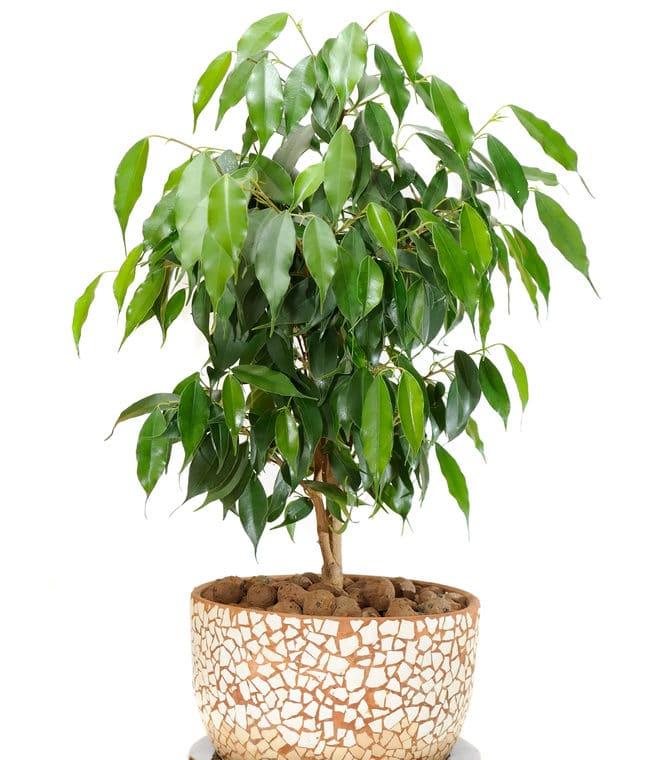!0 Low-Light Indoor Plants