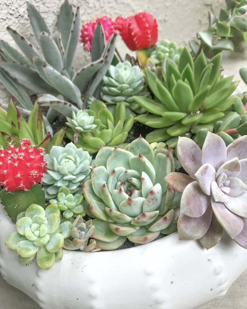 Learn how to care for succulents!