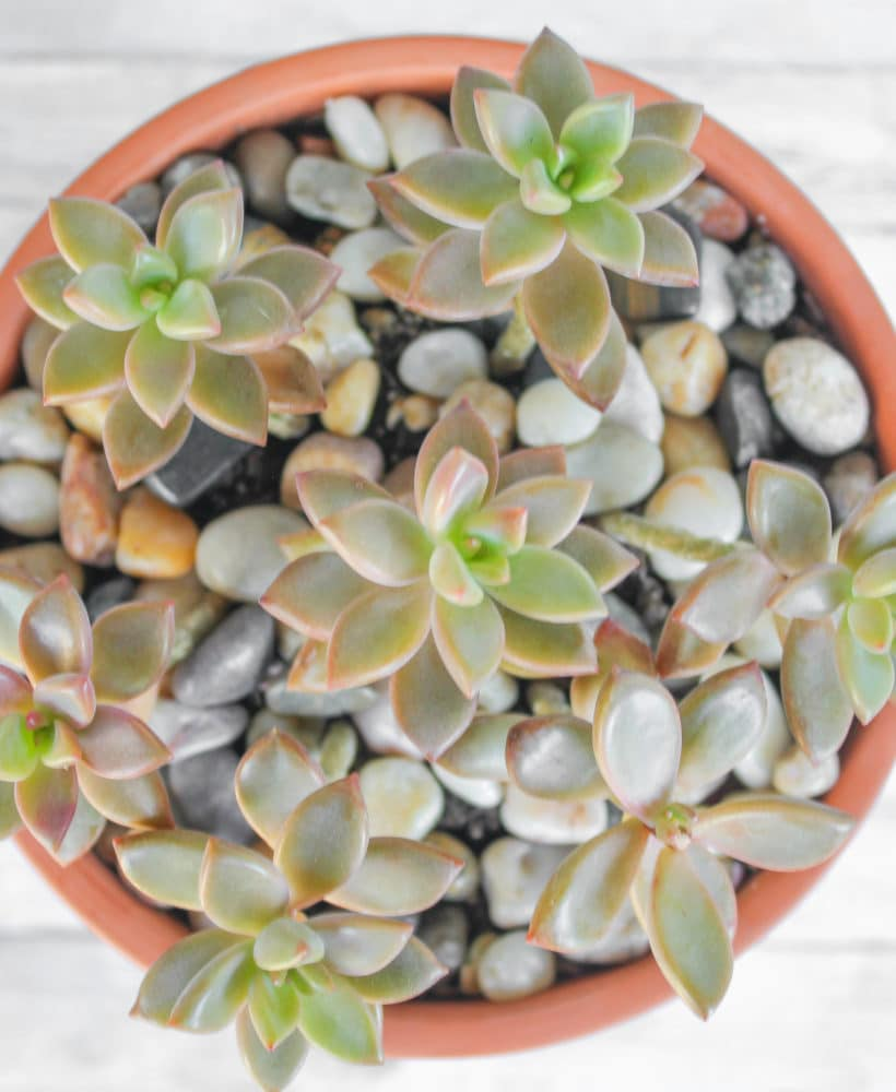 Learn how to care for succulents today!
