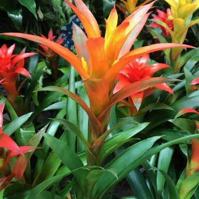 Bromeliads are the perfect low light plants!