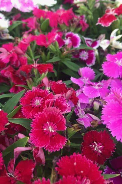 15 Full-Sun Perennials for Your Garden