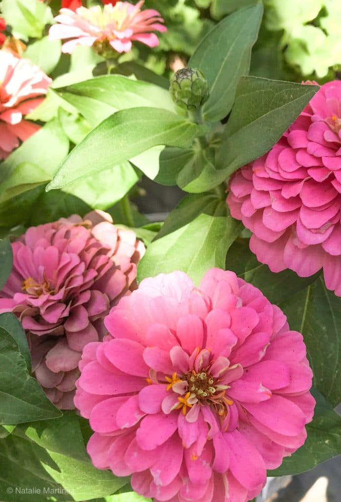 Summer-blooming annuals.
