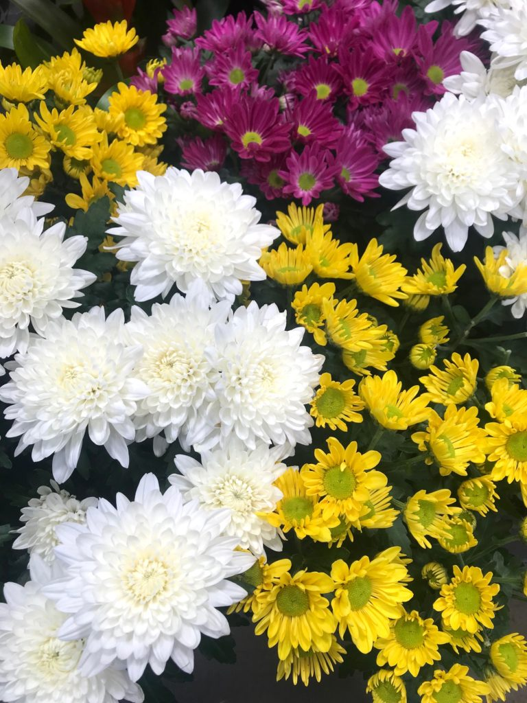 Learn how to care for potted chrysanthemums