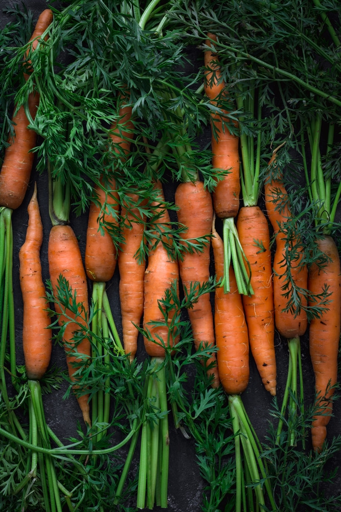 Carrot in containers
