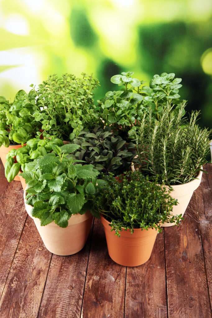 Check out this list of easy-to-grow herbs!